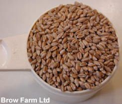 Wheat grains for milling